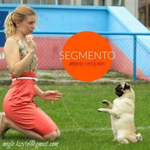 Segmento_web
